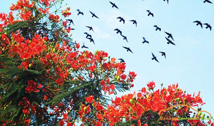 RED FLAMBOYANT FLOWER FESTIVAL 2018 TO PROMOTE THE BEAUTY OF HAI PHONG CITY