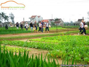Tra Que vegetable village – A famous tourist destination of Hoi An
